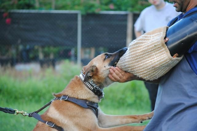 House Training An Adult Dog  Solving Common Issues
