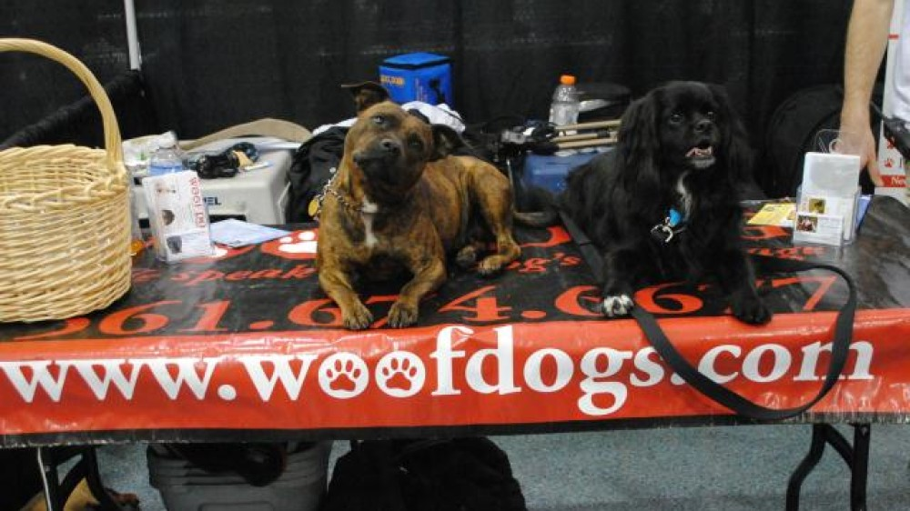 Woof Dogs Event