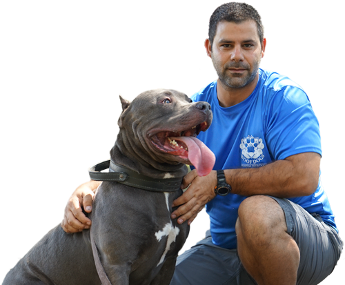 Woof Dogs Dog Training Boca Raton Florida