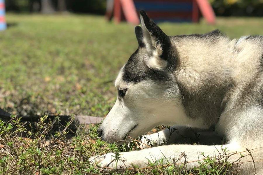 bootcamp-training-huskie-woofdogs